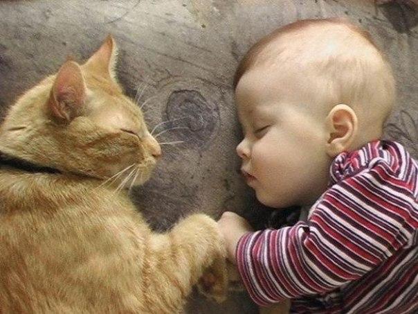 20 моментов, когда коты были хорошими людьми: ↪ На самом деле у котов большие добрые сердца!