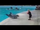 дельфин играет с ребенком