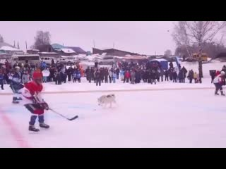 ️ Внимание! Неожиданный гость на замерзшем озере! Attention! - Unexpected guest on the ice