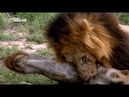Хищники Африки - Смертельное оружие 3 из 3