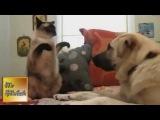 Самые смешные приколы с кошками, собаками. Смешные видео с животными (2013) // August 2013