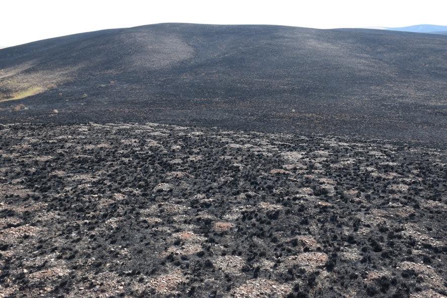 Сгоревшая Буртинская степь