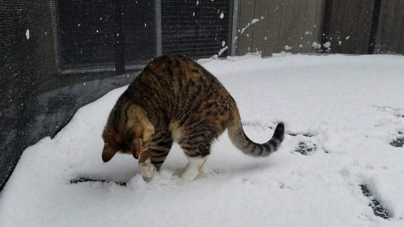 Cute kitten first time in snow!