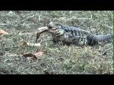 Visita ao Zoológico Municipal de Bauru | Efiree.com