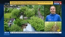 Новости на Россия 24 Дачники останутся без урожая из за природных катаклизмов