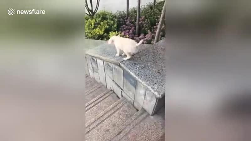 C N N( mass-media video)📹 - Cute puppy enjoys sliding down on smooth stair wall