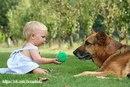 За маской шаловливого пса в овчарке можно увидеть мудрость…