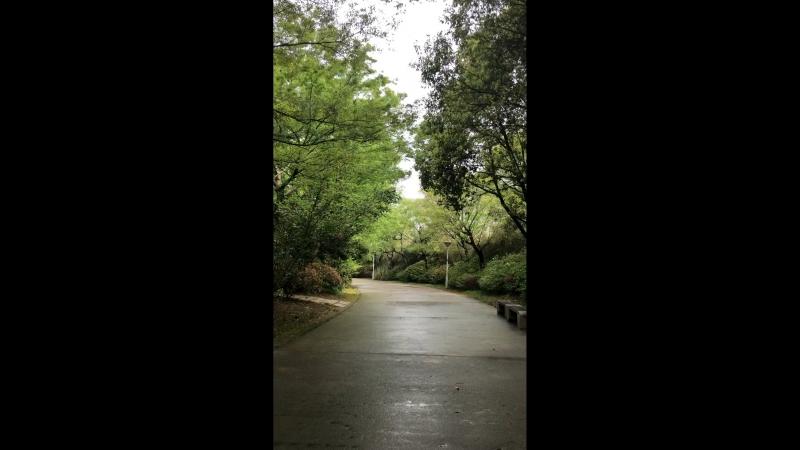 заболоченный парк