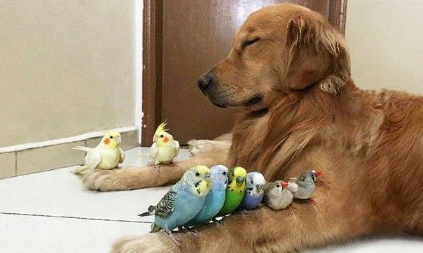 20 фотографий, доказывающих, что нет никого преданнее собаки: ↪ Оммммммм.