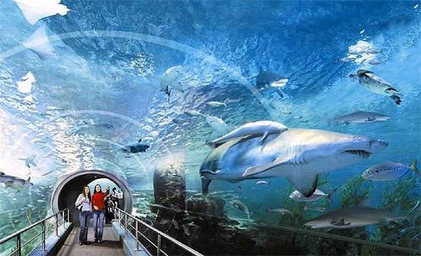 Океанариум Планета Нептун - Санкт-Петербург - отзывы