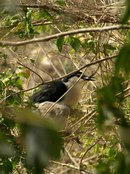 Птицы в Си Сатчаналай
