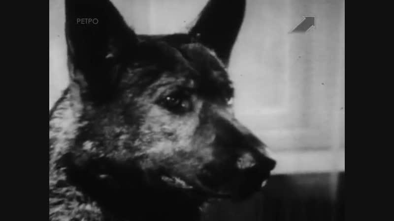 Кантор - собака детектив 5 серия (1976г)