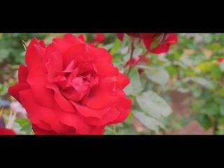 0001 Mиллион алых роз  на итальянском языке.  Un milione di rose rosse - di  Alexeevna