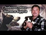 Собака Михаила Круга - Домашний Архив!!!