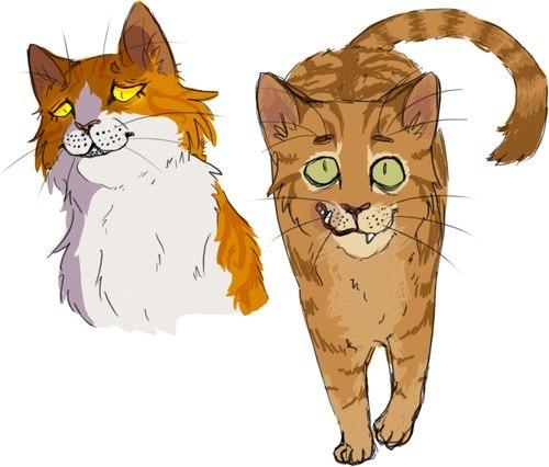 Картинки из котов воителей метеор