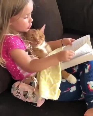 Спят усталые котейки