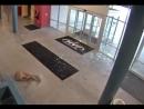 Олень в спортзале