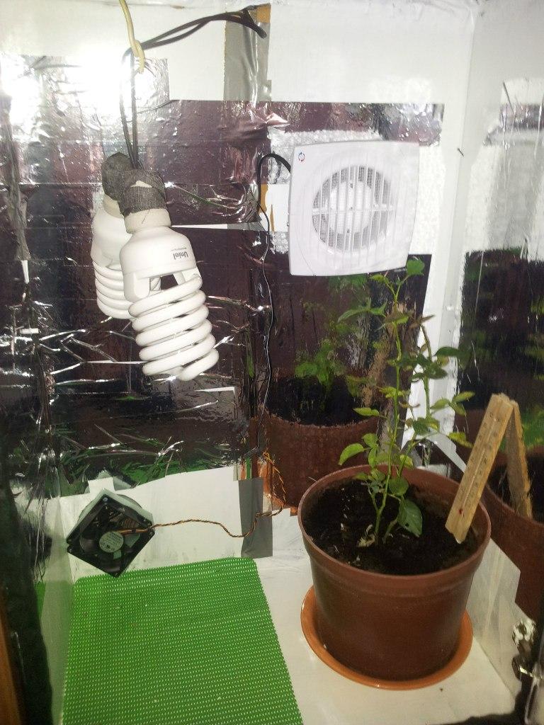 Гроубокс для выращивания грибов 58