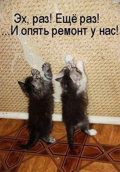 Кошки и прочие забавные животные  - Страница 7 DUO8Ds9RzNo