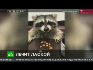 В ростовской ветклинике енота назначили на должность психолога ( 480 X 854 ).mp4