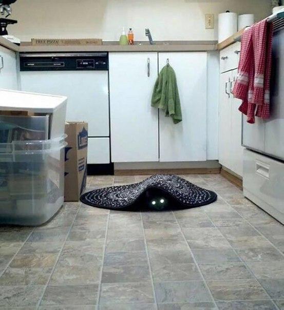 10 доказательств, что кошки — посланники дьявола)