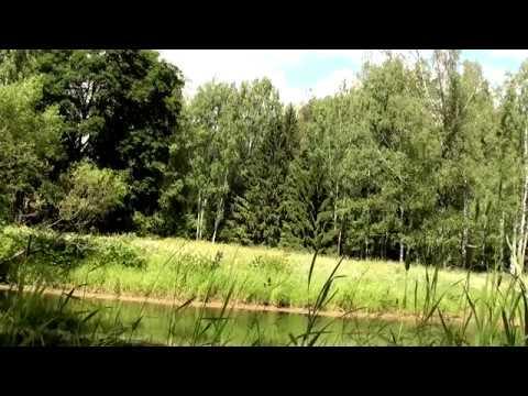 4 часа Поющий пруд Пение соловья Звуки природы Лягушки в пруду