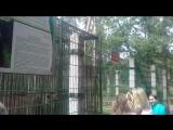 Мишки из Беловежской Пущи