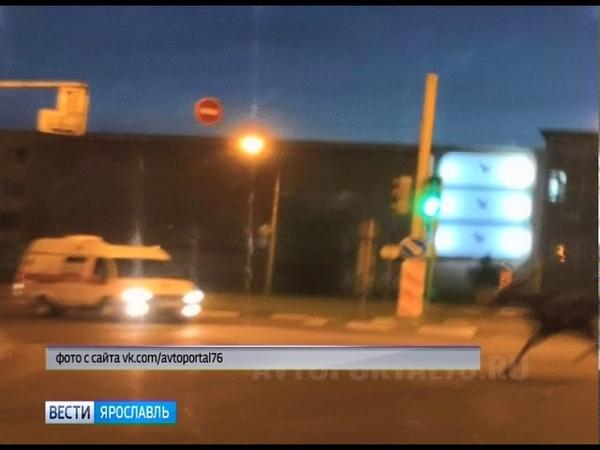 В центре Ярославля лось перебежал дорогу прямо перед машиной