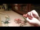 Названия динозавров Тимофей Ладошкин
