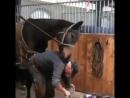 У лошадей тоже есть свои любимчики)