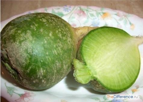 Разница между черной и зеленой редькой Подумать только, как много вкусных и полезных овощей незаслуженно забыто нашими соотечественниками! Взять хотя бы репу, брюкву, пастернак, патиссон, редьку