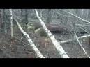 Мертвый лес у Ново Шемурского месторождения