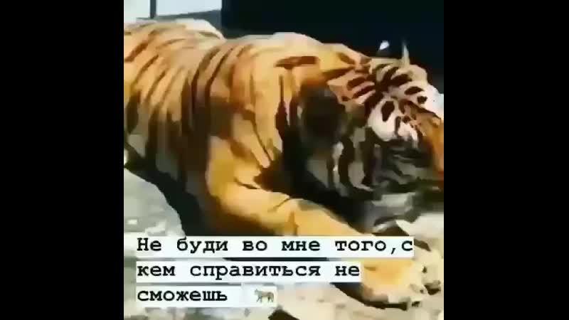 Boss_zok0520190716105622884.mp4