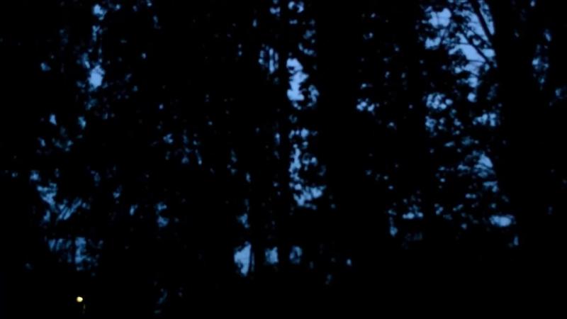 1Час - Настоящий Рассвет Соловьи и Другие Птицы _ Live Nightingales Singing