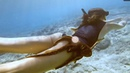 Friendly Octopus Clings To Diver's Leg