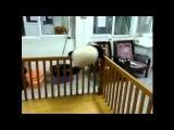 Панда пытается сбежать из неволи.flv