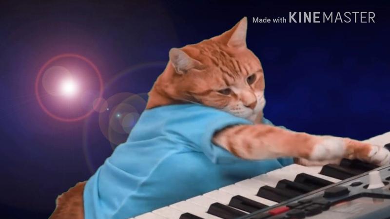 Кот Бенто, кот пианист.Keyboard cat-Bento