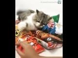 Прикол с котом. Жадный кот. Полярная кошка.