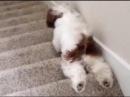 Смешные собаки и лестница cvtiyst cj,frb b ktcnybwf