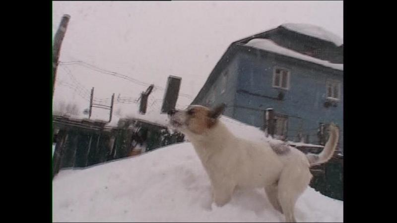Снег надоел все!