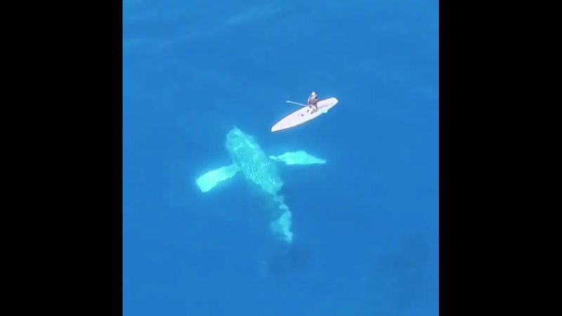 Repost @ uheheu ・・・ Сёрфинг, это не только волны и каталка☝🏼🏄🌊 Благодаря серфингу, можно открыть новые горизонты в океане🙏🏻😎🔥 .