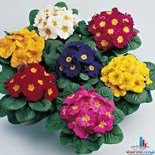 зодиак - Магия растений. Магические свойства растений. Обряды и ритуалы. Амулеты и талисманы из растений.  9J_e4uc2Z3w