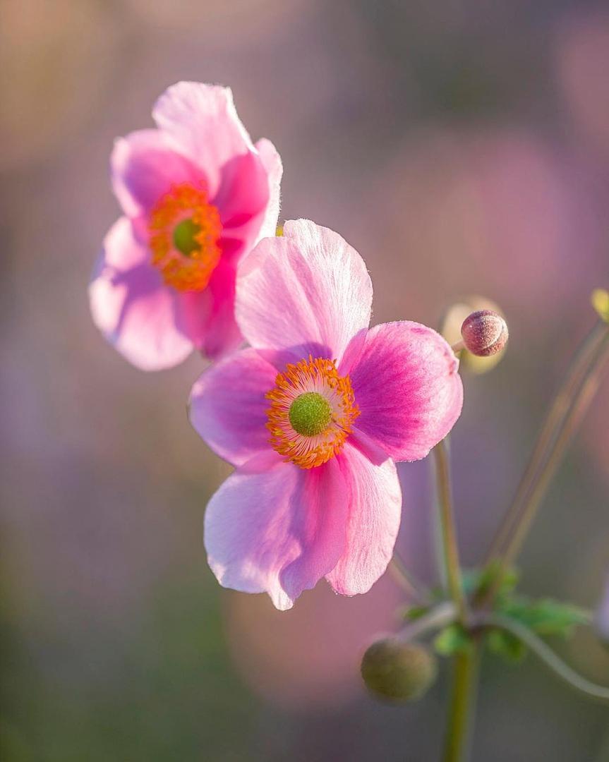 Цветы в объективе Clive Nichols