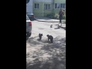 Courageous Crow Tries to Stop Feud Between Two Cats __ Viralhog