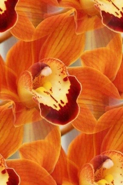 Цветочные и растительные фоны - Страница 3 DcfdjWAl8rA
