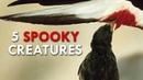 The 5 Spookiest Creatures