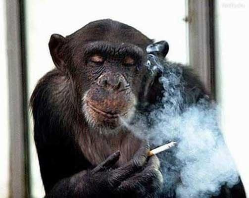 0какие народные средства помогут бросить курить