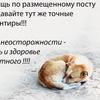 Единый Информационный Центр. Помощь животным