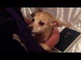 Экзорцист изгоняет беса из собаки