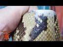 Реставрация балеток из кожи питона. Ремонт кожи, погрызла собака обувь.